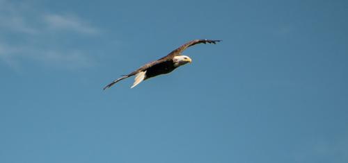 eaglet_02