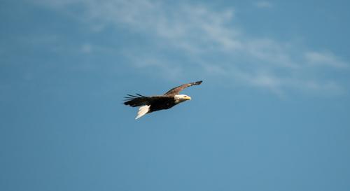 eaglet_03