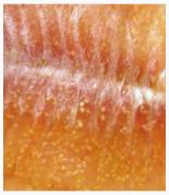Are Yellow Grubs in Fish Harmful to You?