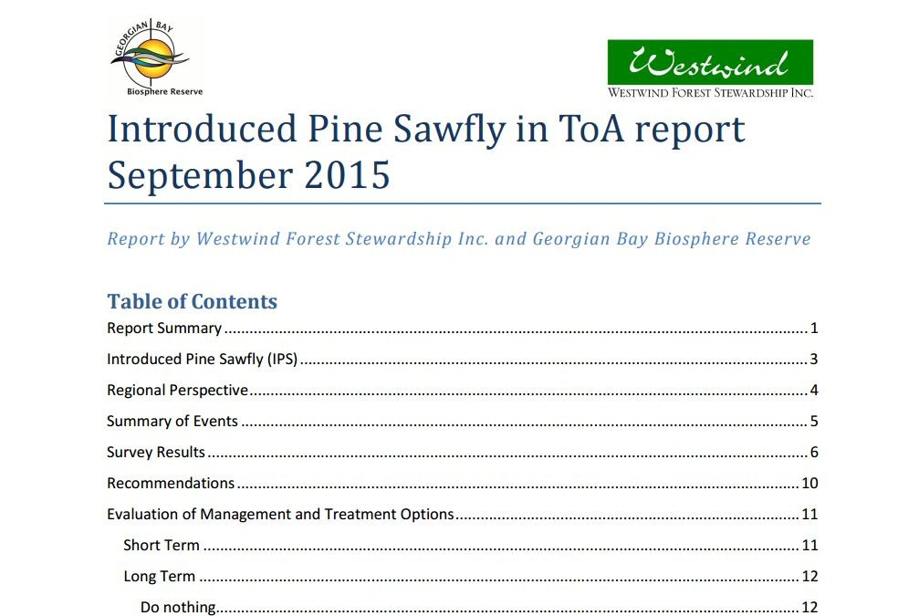 Introduced Pine Sawfly in ToA report September 2015