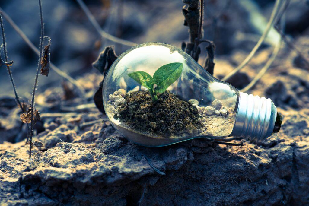 Light bulb mini biome
