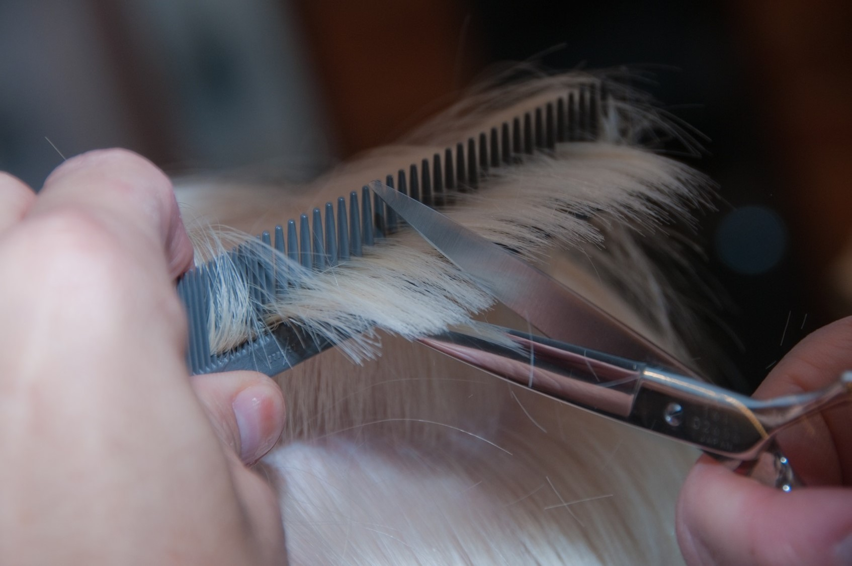 Cutting blonde hair