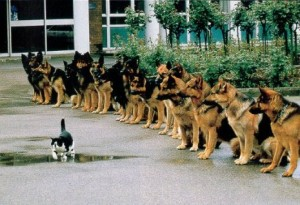 obedience_1