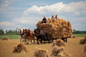 Bringing-in-the-Sheaves2