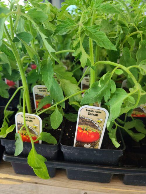 tomate rouge SAROM