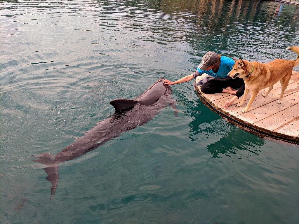 dolphin-reef-in-eilat-israel