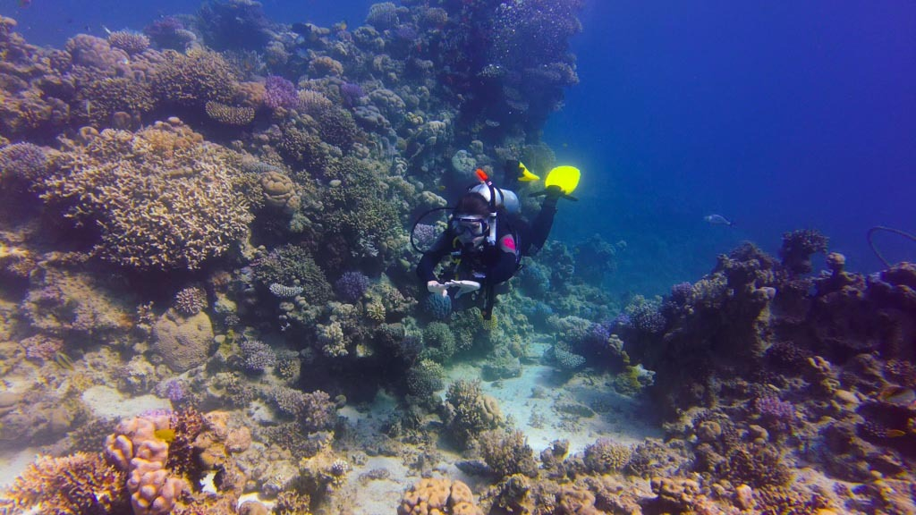 getting-padi-certified-in-sharm-el-sheikh-egypt