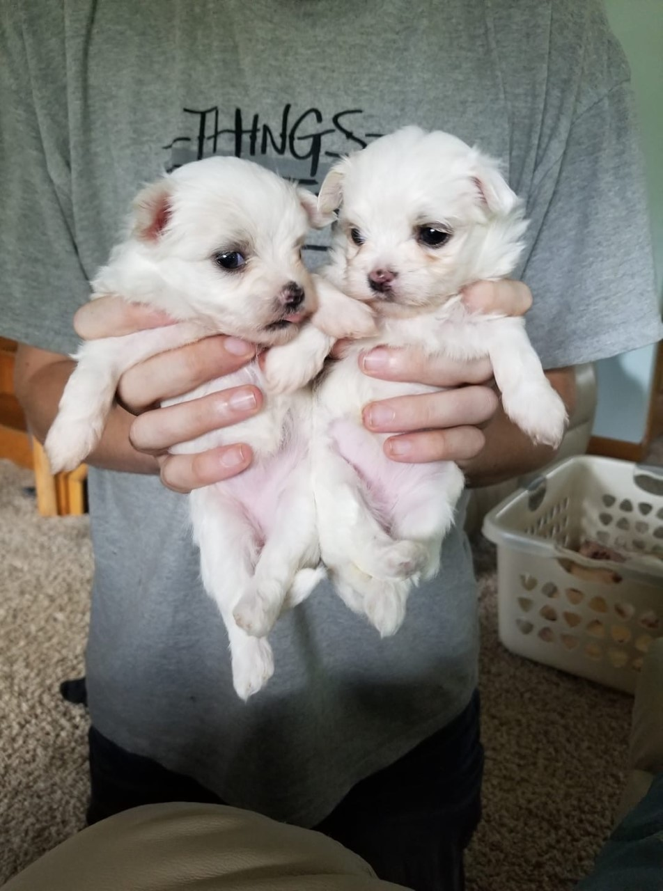 newpuppies