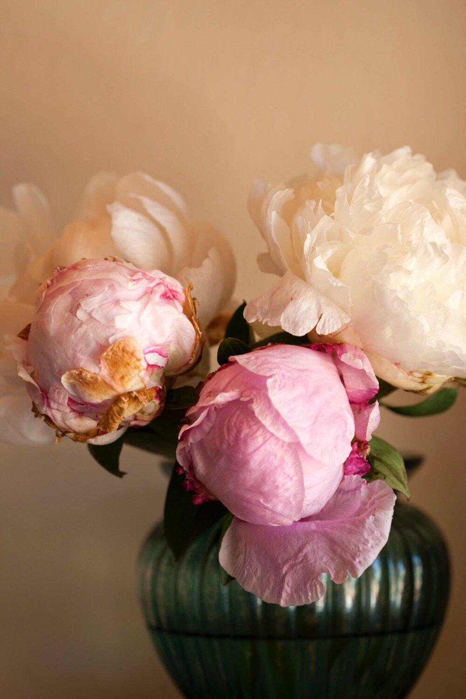 bloom-blossom-flora-1608525