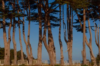 Cypress Trees, Point Arena Odd Fellows Cemetery, Mendocino Pacific Ocean Coast, California, copyright 2012 David Leland Hyde.