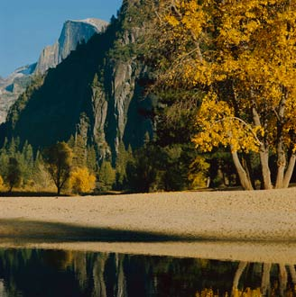 Cottonwoods, Merced River, Fall, Yosemite Valley, Yosemite National Park, Sierra Nevada, California, copyright 1973 by Philip Hyde. This is the original 2 1/4 Hasselblad framing. Philip Hyde often cropped his 2 1/4 photographs to 4X5 dimensions and composed accordingly.