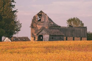 Barn Skeletons in Soybean Field Near Oslo, Minnesota by David Leland Hyde.