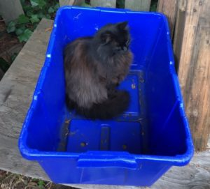 recycle-your-cat