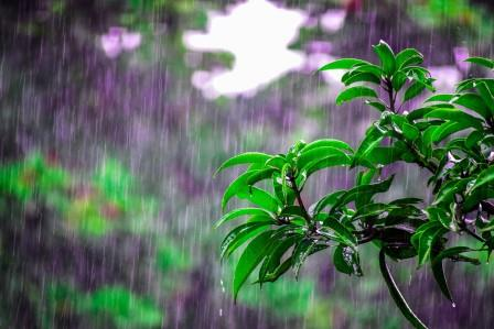 Cleaning up your yard after rain!