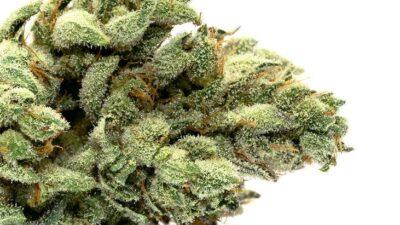 Indoor cannabis gg4