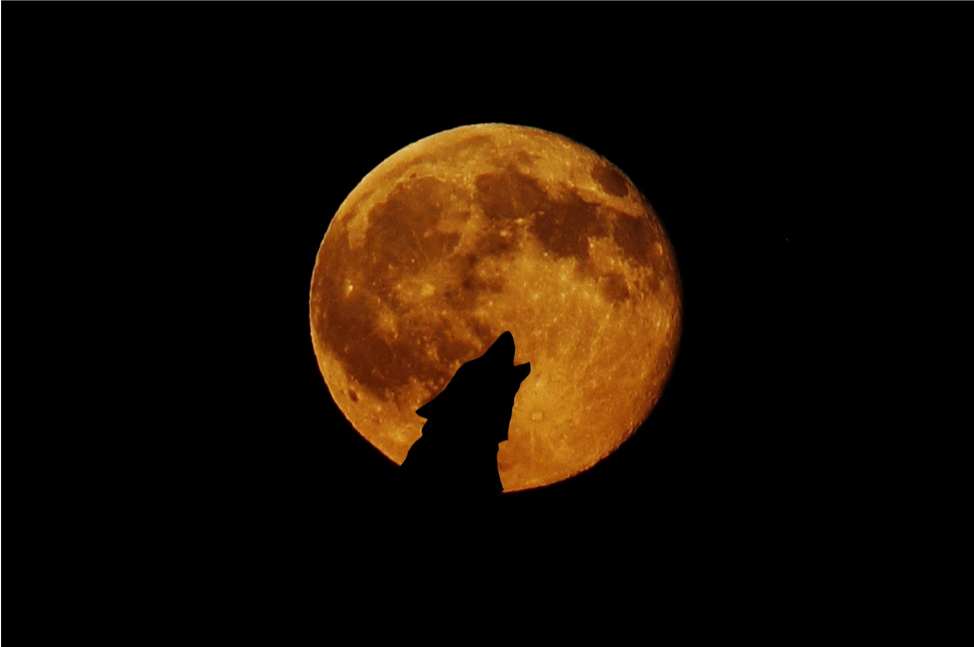 Helpful Tips to Keeping Your Inner Werewolf Calm During a Full Moon or Eclipse