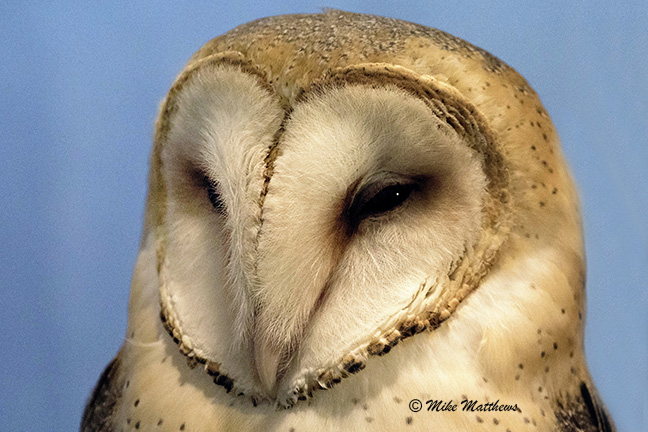 Barn Owl email copy