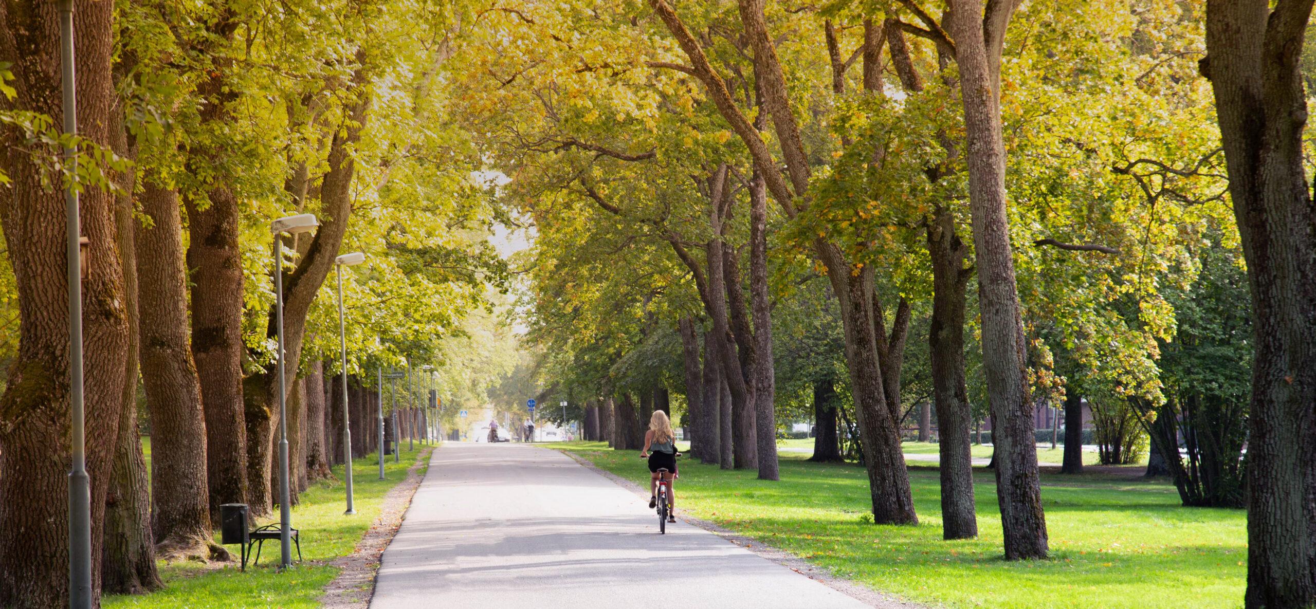 Ardsley Park Savannah