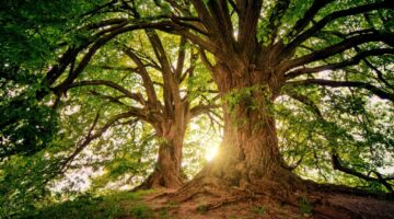 savannah-trees-melinda-martin-bailey