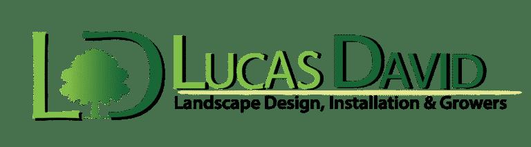 Lucas David Landscape