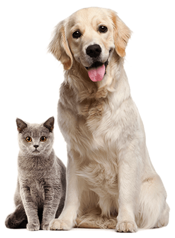 pets-about-free-img