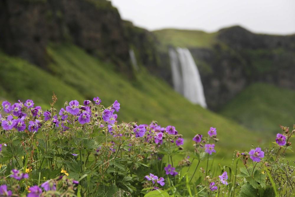 Seljavallalaug & Dyrhólaey, South Iceland