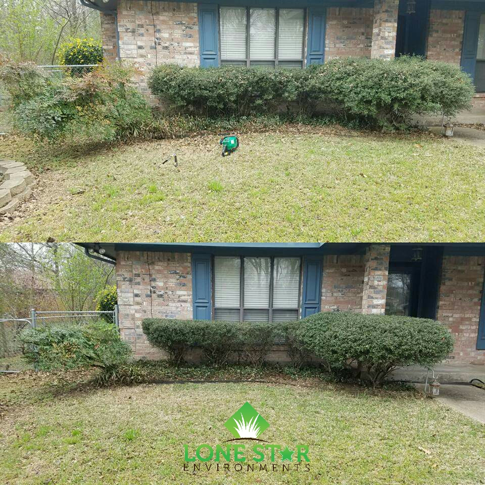 shrub trimming greenville texas
