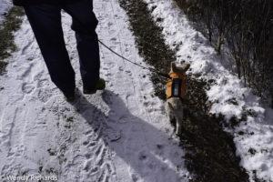 Chaz enjoying walking where there wasn't snow.