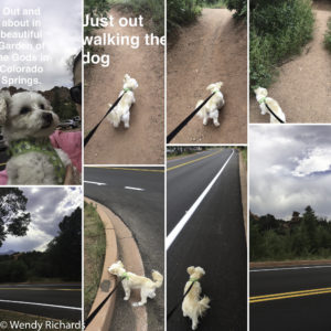 a collage of the photos I took on our walk. It is surprisingly hard to get 'good' photos when a dog is pulling on the leash.