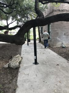 tree branch brace