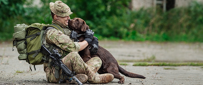 Military Dogs: A Beautiful Companionship