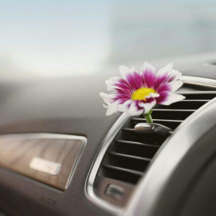 Car interiors Whistler