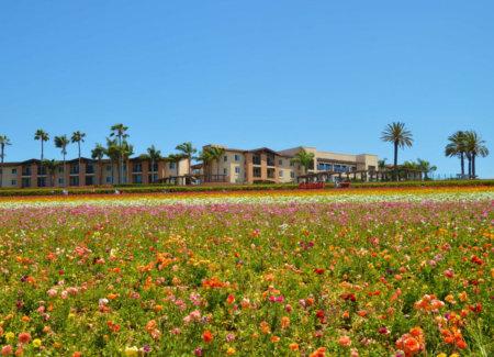 The Carlsbad Flower Fields | Everyday Mantras