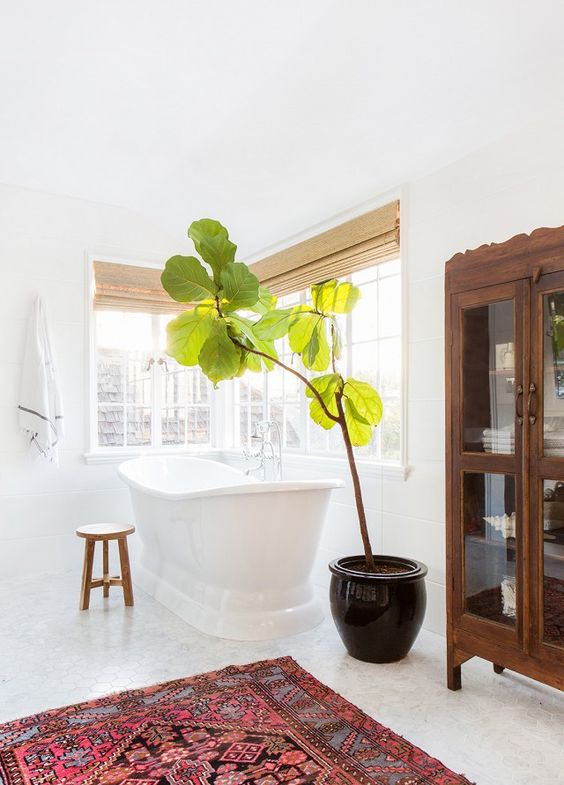 Find the right kind of plant to add to a bathroom | Girlfriend is Better
