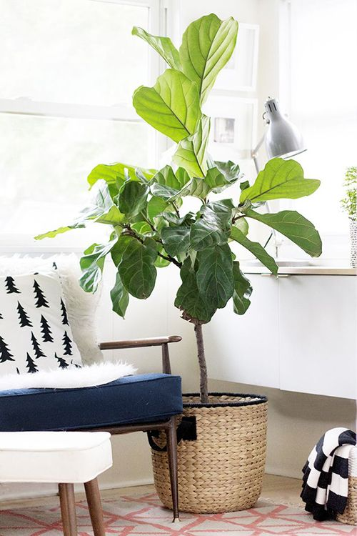 Place tall trees in the family center of your home | Feng Shui decor guide | Girlfriend is Better