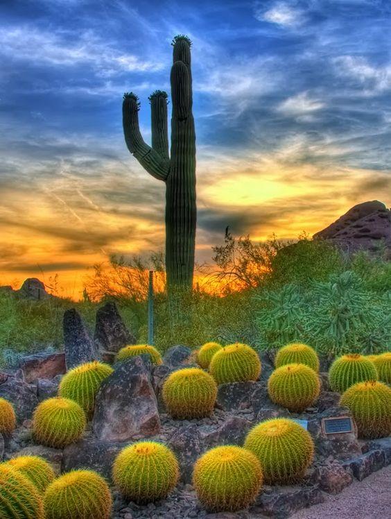 Sunset & Barrel Cactus in Sonoran Desert, Scottsdale Arizona | Travel Tips | Girlfriend is Better