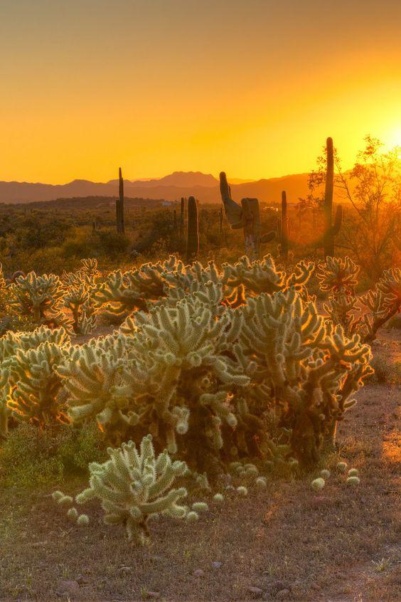 Desert catcti in Scottsdale Arizona | Travel Guide | Girlfriend is Better