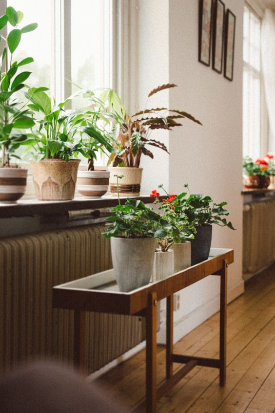 Energize your home with plants that are good Feng Shui   Girlfriend is Better