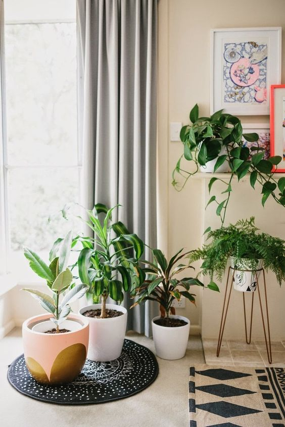 Fill an empty corner with plants to energize a room | Feng Shui | Girlfriend is Better