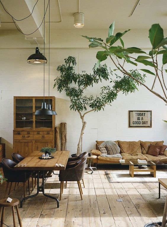 Use trees to create stability in your home | Feng Shui plants | Girlfriend is Better