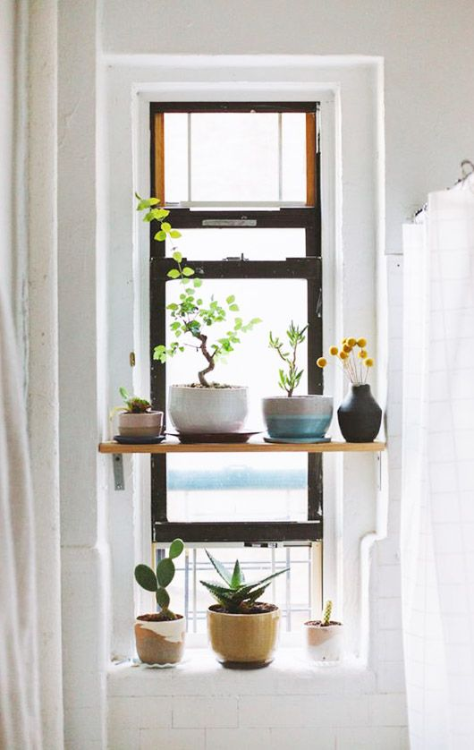 Plants in ceramic pots on open shelving by window | Aquarius astrology home decor guide | Girlfriend is Better