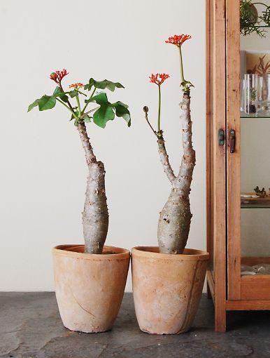 Earth element Feng Shui | Japanese belly plants in terra cotta pottery | Girlfriend is Better