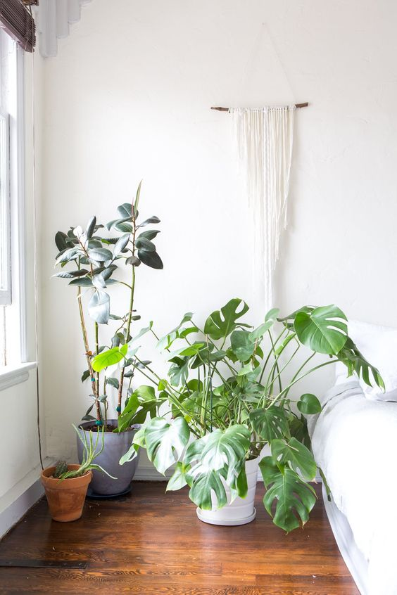 Monstera Deliciosa tropical floor plants sunny bedroom nook | Girlfriend is Better
