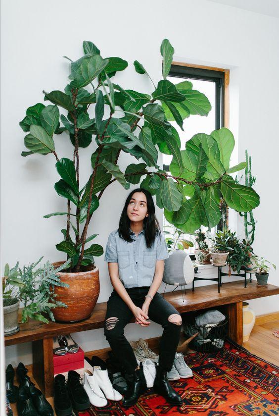 fire element Feng Shui | fiddle leaf fig plant bohemian | Girlfriend is Better