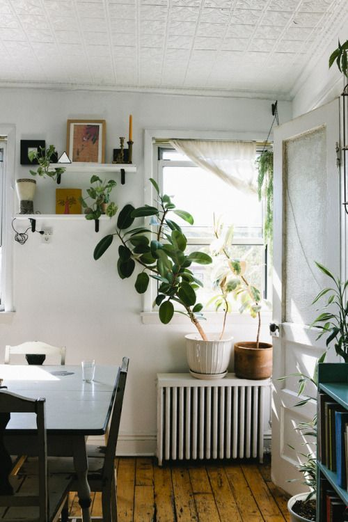 rubber plant | French country kitchen nook vintage decor | Girlfriend is Better