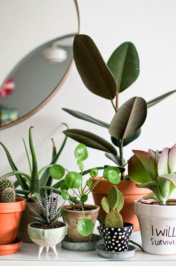 rubber plant | terracotta pots vintage planters succulents | Girlfriend is Better