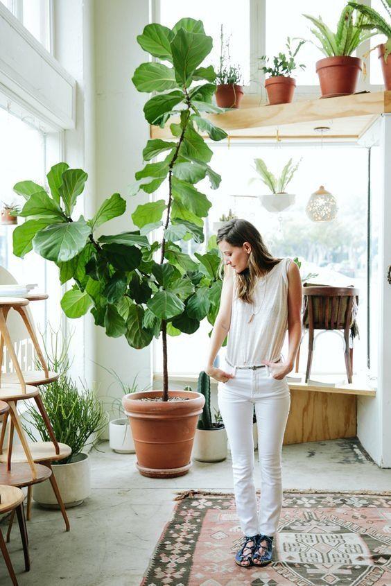 fiddle leaf figs | plant care guide Bohemian ficus lyrata | Girlfriend is Better