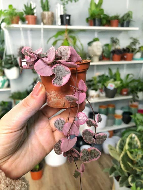 pink plants | plant lady miniature pottery leaves | Girlfriend is Better