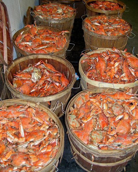 Port Townsend Washington | crab fishing travel guide | Girlfriend is Better