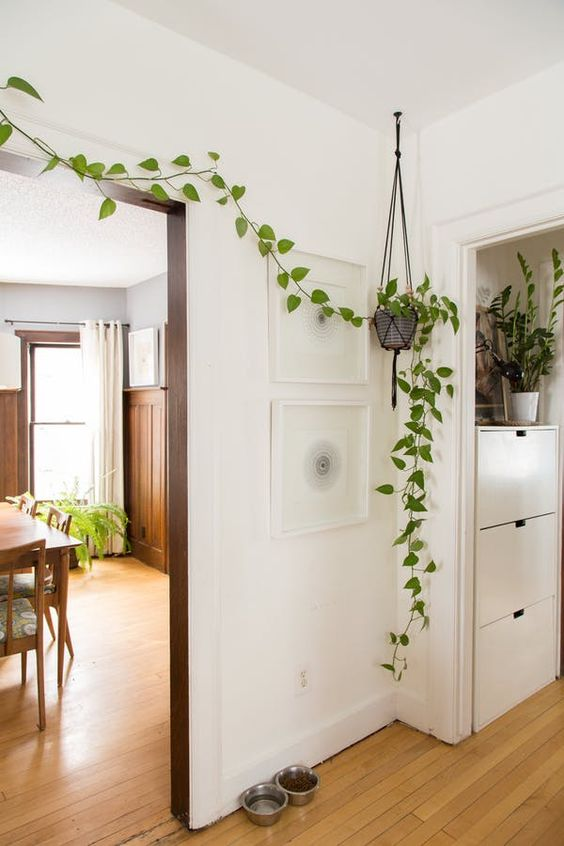 plant minimalism | hanging wall plant kitchen Feng Shui | Girlfriend is Better